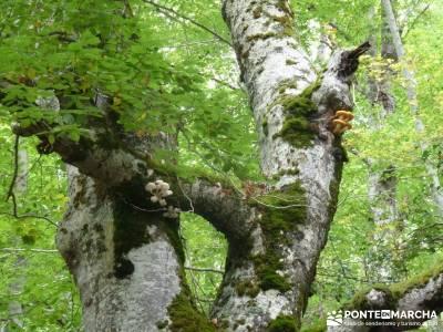 Parque Natural Sierra de Cebollera (Los Cameros) - Acebal Garagüeta;revistas senderismo rutas excur